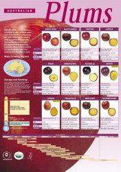 Plum Variety Chart