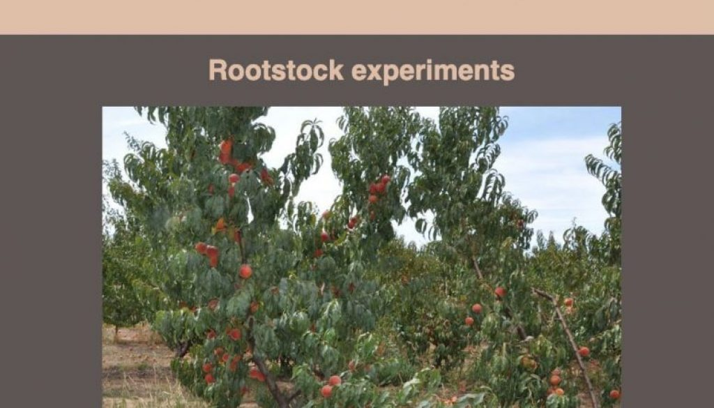Latest-Research-From-The-Stonefruit-Research-Orchard---May-2019